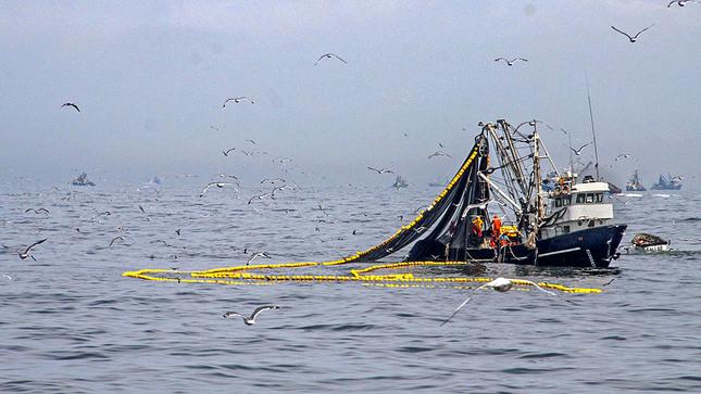 Produce: Pesca de anchoveta registra avance de 81.7% de cuota asignada para primera temporada 2020
